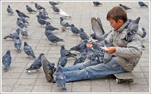 Мальчишка кормит голубей фото
