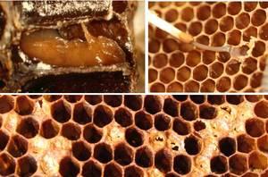 Заболевания пчел