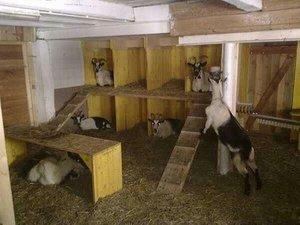 Постройки для животных козы