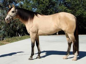 Буланая лошадь фото