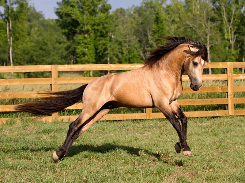 его комменте фото бежевых коней этого