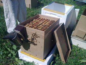 Нуклеусы для пчел