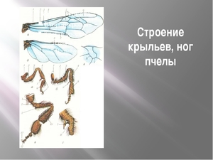 Летательный аппарат пчелы
