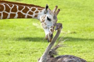 Факты о животных всегда интересны людям