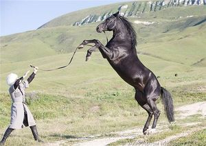 Описание породы кабардинской лошади