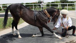 Области использования ахалтекинских лошадей