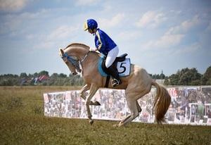 Использование ахалтекинской породы лошадей в спорте