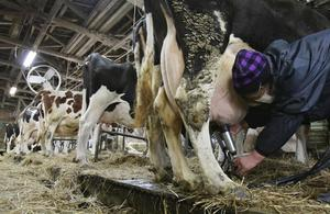 Количество молока в сутки от коровы