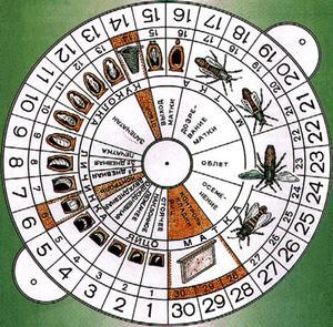 Для удобства контроля процесса заведите календарь пчеловода