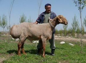 Узбекский баран