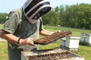 Инструкция по применению препарата Лозеваль для пчёл