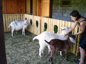 Каким должен быть козлятник для коз