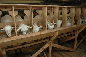 Как сделать кормушка для коз