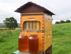 Технология разведения пчел