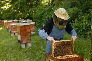 Новое в пчеловодстве
