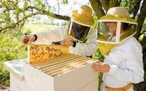 Современное пчеловдство