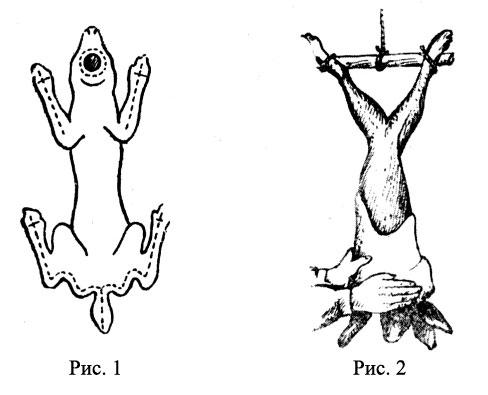 Схема убоя кролика