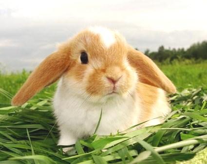 фото декоративного кролика