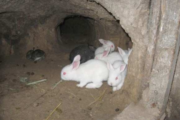 как содержать кроликов в яме видео