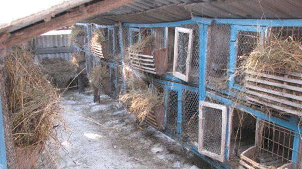 кролиководство в Украине
