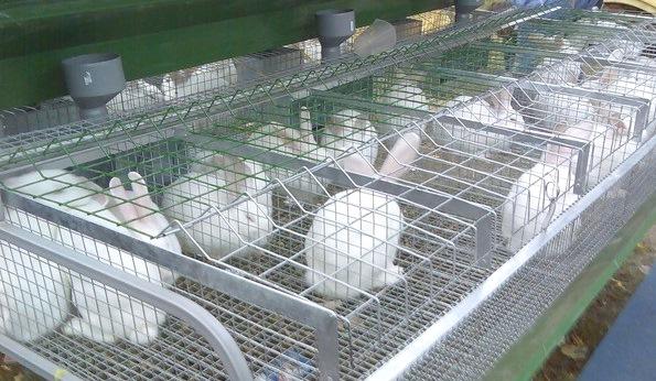 Выгоды разведения кроликов в разных масштабах