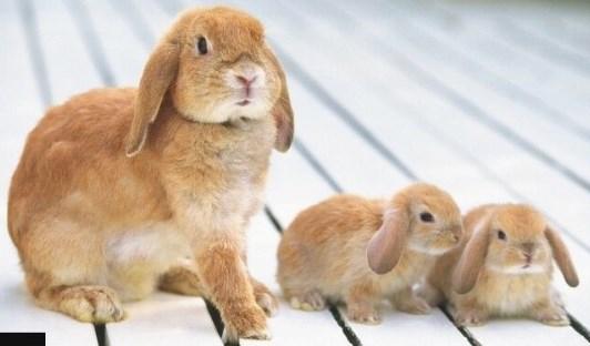 выгодно ли разводить кроликов