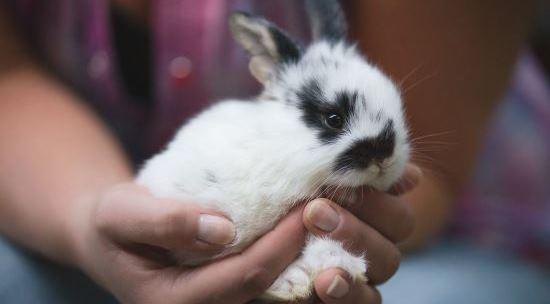 Разведение декоративных кроликов в домашних условиях для начинающих 70