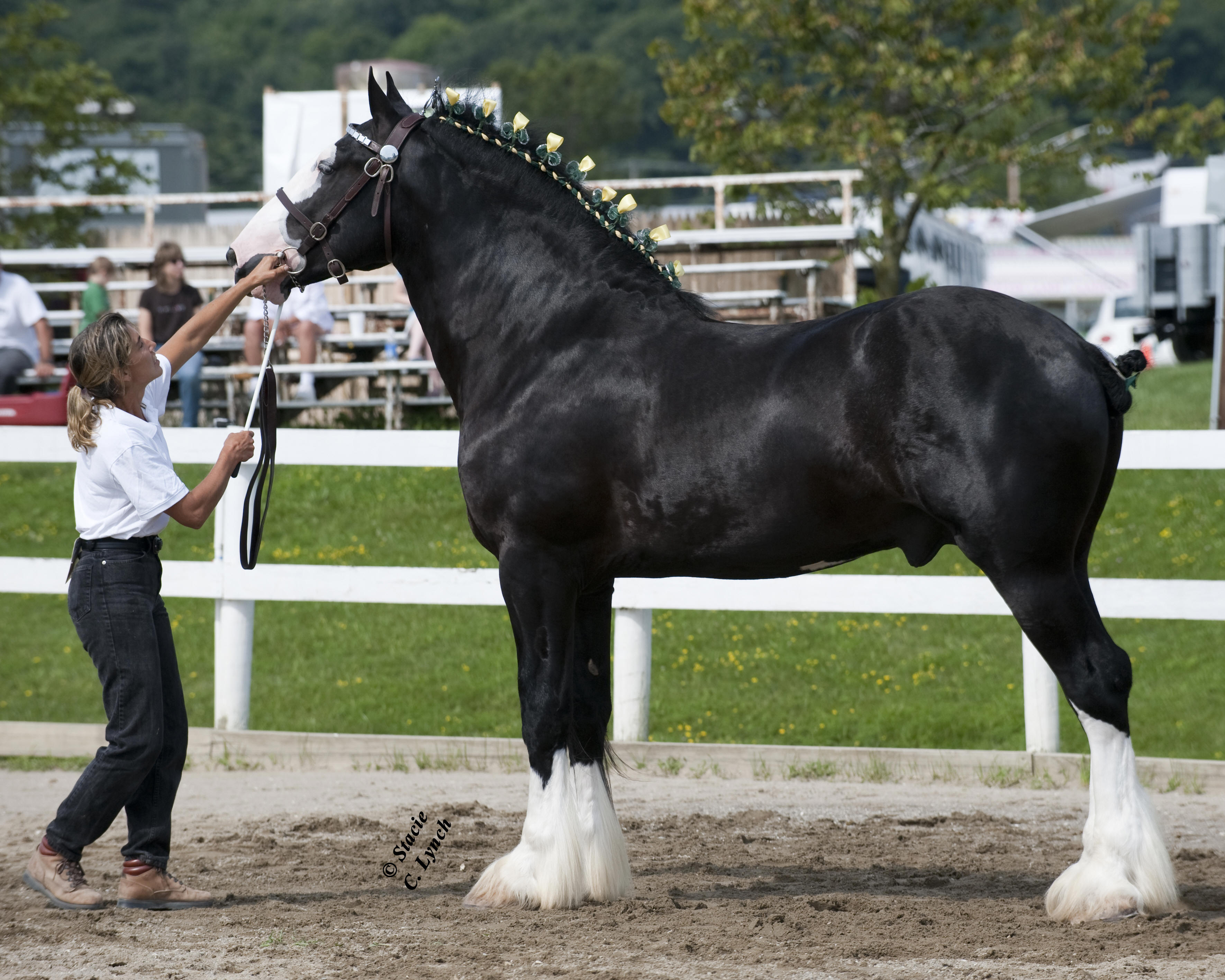 world's largest horse - HD3540×2832