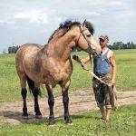 Буланый конь — какой это цвет лошади