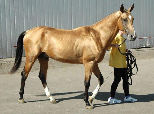 буланый конь это какой цвет