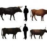 Вымершее древнее животное дикий тур — предок коров и быков