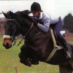 История черкесских коней. Особенности кабардинской породы лошадей