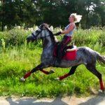 Конь-иноходец — американский рысак и другие породы
