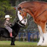 Кони пони: виды, описание, питание карликовых лошадей