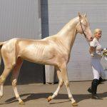Основные масти лошадей — как называются и чем отличаются