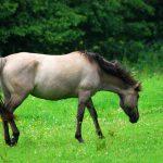 Мышастый конь - это какой? Лошади необычной масти