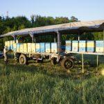 Создание пчелопавильона как рациональный способ ведения пчеловодства