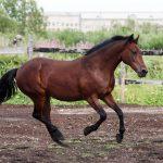 Породы самых знаменитых и красивых лошадей России