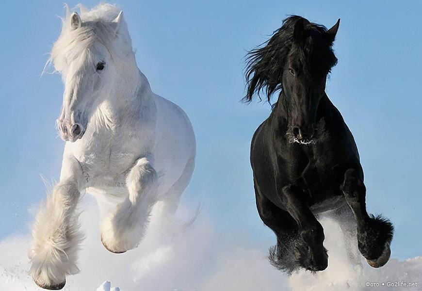 сколько видов лошадей