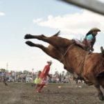 Что такое родео или скачки на быках