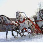 Русские сани для лошади и телега. Делаем своими руками