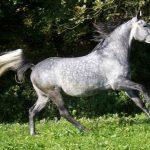 О лошадиной силе. Самая быстрая лошадь в мире