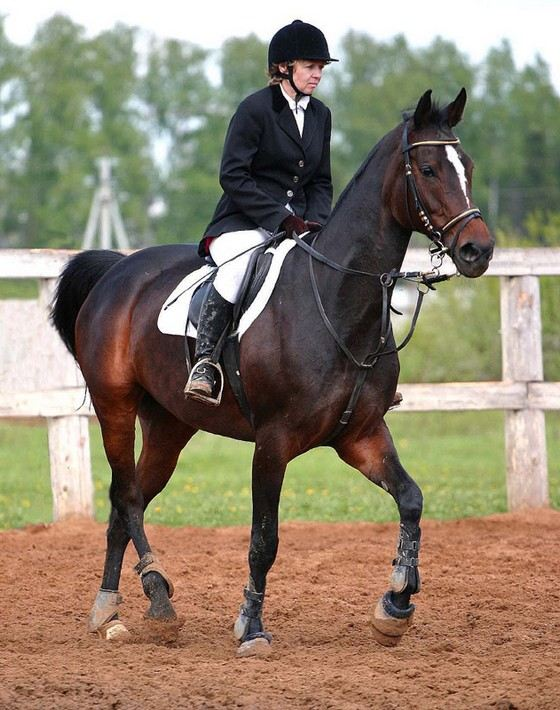 породы скаковых лошадей фото Использование печки