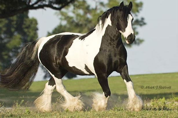 Картинки по запросу лошад