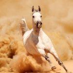 Самые красивые и необычные породы лошадей в мире