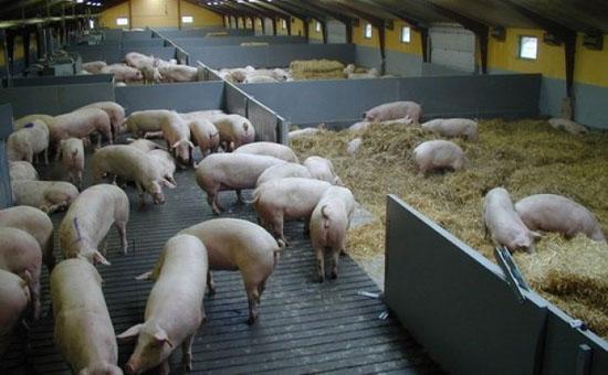 получения подробной заказать проект свиноферм хабаровск хотели предоставить ответы