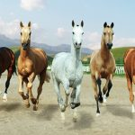 Туркменский скакун — ахалтекинская лошадь, описание породы