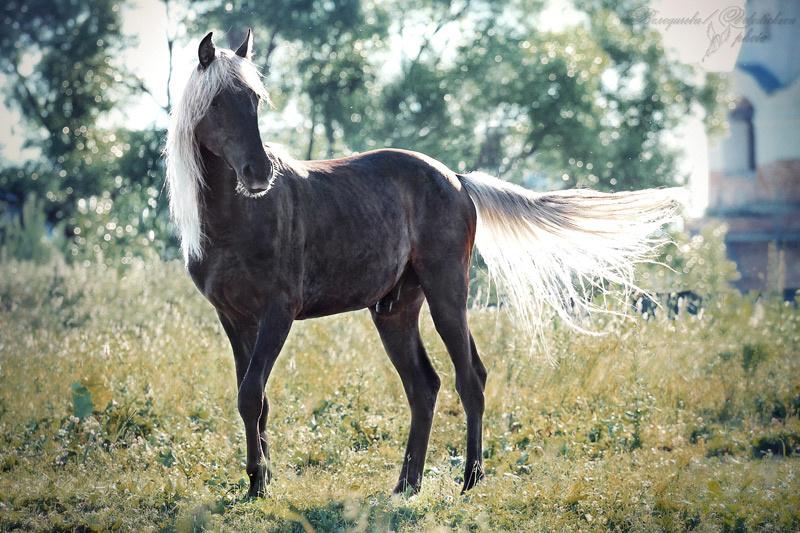 Лошади игреневой масти картинки