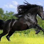 Вороной конь: особенности масти и историческое значение