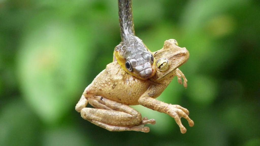 Двадцать интересных и занимательных фактов о змеях